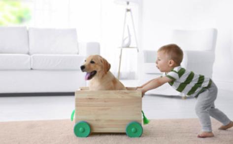 Asthma bei Kindern: Kann ein Familienhund schützen?